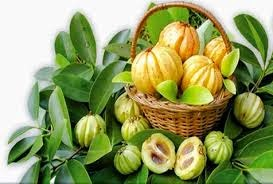 Dr. Oz: Garcinia-Cambogia-Food
